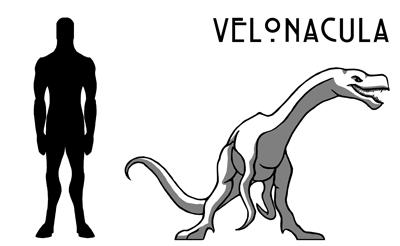 Velonacula.png
